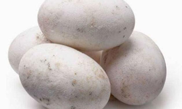 Hukum Makan Telur Buaya